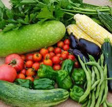 自分だけの家庭菜園の作り方ー土編2ー【ビギナーでも簡単】