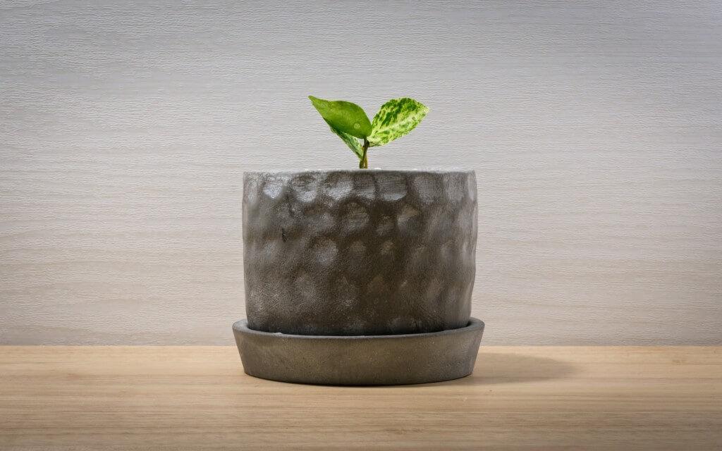 観葉植物の特徴と自生環境を知り、観葉植物の育て方をマスターしよう!