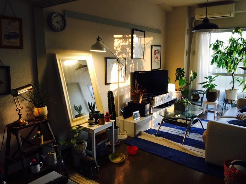 【Elbaz Home】安く買った観葉植物を10倍可愛く見せる4つの方法