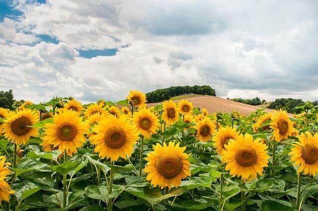 【Elbaz Farm】ガーデニング初心者向け 簡単に育てられる夏の花10選