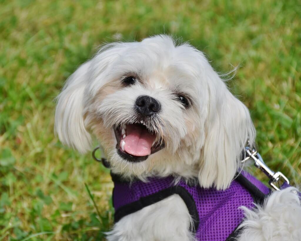 愛犬の健康の為に定期的な歯石除去治療がお勧め!費用・処置内容・効果まとめ
