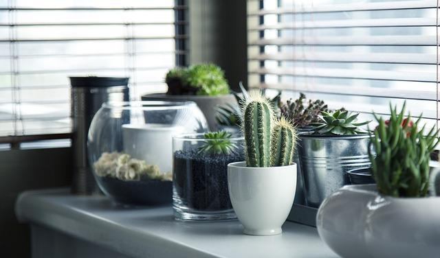 人気観葉植物【柱サボテン】の育て方と簡単お手入れのポイント!