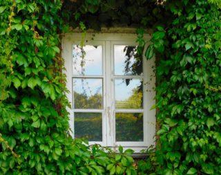 愛らしい葉が魅力のアイビー(へデラ) 特徴と育て方のポイント